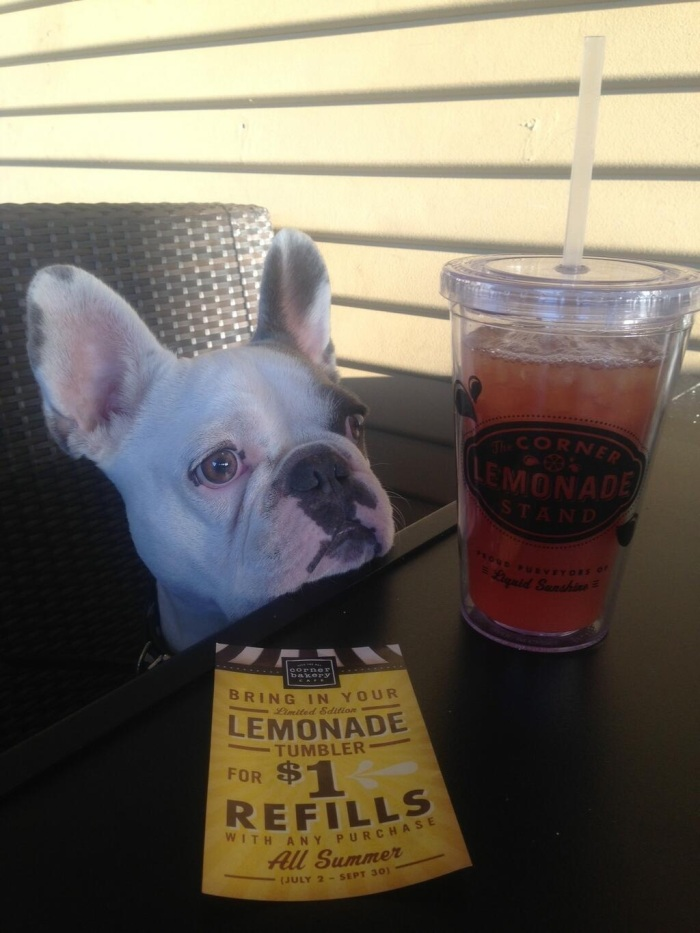 dog with cornery bakery refill cup - at frenchieOtis